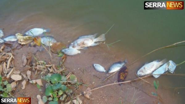 Peixes aparecem mortos no Lago de Javary
