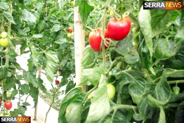 Paty do Alferes realiza oficina de produção de tomates orgânicos